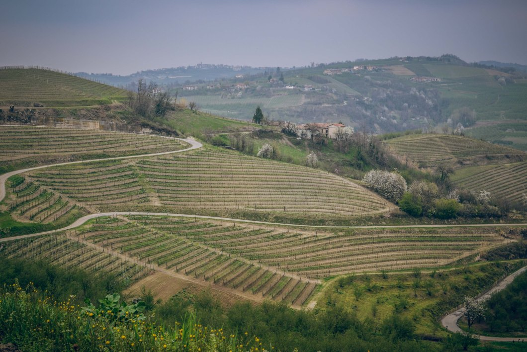 babarolo wineries-2.jpg